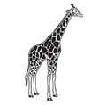 giraffe isolated black icon vector image vector image