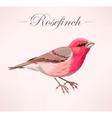 pink bird vector image