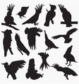 silhouettes cockatoos vector image vector image