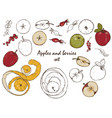 apples and berries set vector image vector image
