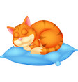 cute cat cartoon sleeping vector image