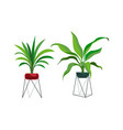 houseplant modern stands tropical ficus or palm vector image