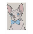 sphynx cat with bowtie vector image vector image