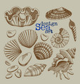 a set of sea shells vector image