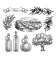 hand drawn olive set vector image vector image