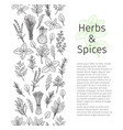 herbs and spice seamless border vector image vector image