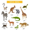 Tropical animals set isolated vector image