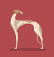 greyhound dog minimalist image vector image vector image