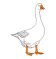 isolated object on white background duck goose vector image