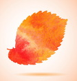 Orange watercolor painted elm tree leaf vector image