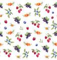 watercolor berries pattern vector image vector image