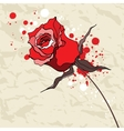 Grunge red rose on Crumpled paper background vector image