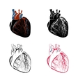 ANATOMY OF THE HEART vector image vector image