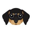 cute dachshund dog avatar vector image vector image