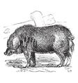 Hog vintage engraving vector image vector image