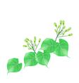 Hoya Carnosa or Madagascar Jasmine on White vector image vector image