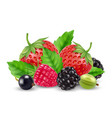 realistic berries strawberry raspberry vector image vector image