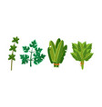 culinary herbs and salad leaves set sorrel vector image vector image