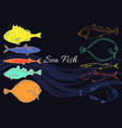 set color fish vector image vector image