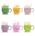 a set of tea made from herbs mint lemon balm vector image vector image
