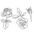 collection beautiful rose flowers drawn vector image