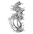 female fowl organs vintage vector image vector image