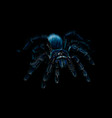 portrait of a spider tarantula grammostola on a vector image vector image