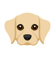 cute labrador retriever dog avatar vector image vector image