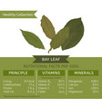 healthy collection bay leaf vector image vector image