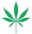 cannabis leaf1 resize vector image