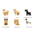 breeds dogs collection akita inu pitbull vector image