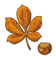 Chestnut leaf and nut color vintage vector image