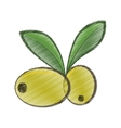 drawing two green olive leafs organic food vector image