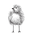 Hand-drawn pencil graphics chicken chick vector image vector image