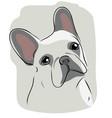 head french bulldog vector image vector image