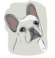 head of french bulldog vector image vector image