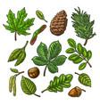 set leaf acorn chestnut and seed vintage vector image vector image
