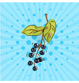 bird cherry twig on blue background vector image