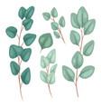 botanical flat eucalyptus populus set hand vector image vector image