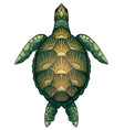 color cartoon of green turtle the vector image