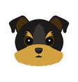 cute yorkshire terrier dog avatar vector image vector image