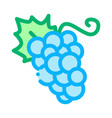 grape berries icon outline vector image