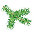 green spruce branch isolated on white background vector image vector image