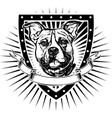 pit bull shield vector image
