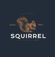 logotype squirrel vector image vector image