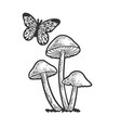mushrooms and butterfly line art sketch vector image