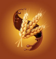 bunch of wheat or barley ears in chocolate vector image