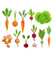 collection growing vegetables plants showing vector image