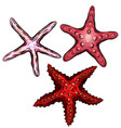 set of color cartoon of starfishes vector image