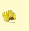 set of line-art bananas overripe banana hand vector image